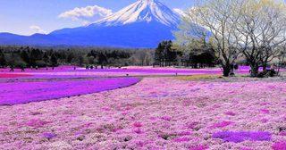 14 สีสันของโลกที่สวยจนคุณต้องหยุดหายใจ !