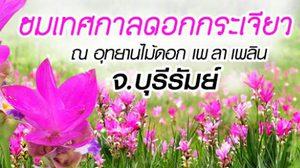 ชมเทศกาลดอกกระเจียว ณ อุทยานไม้ดอก เพ ลา เพลิน จ.บุรีรัมย์