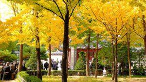 ใบไม้เปลี่ยนสี ฤดูใบไม้ร่วง ที่ เกาหลี ญี่ปุ่น