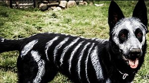 8 Dogs Trying Hard to be Scary, but the Cats