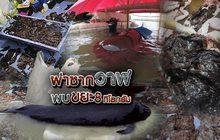 ผ่าซากวาฬพบขยะ 8 กิโลกรัม 05-06-61