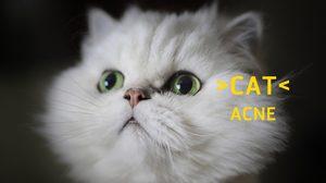 รู้มั้ย? แมวเป็นสิว ได้นะ | Cat Acne เกิดจากอะไร รักษาอย่างไร
