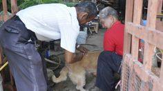 โคราช พบพื้นที่เสี่ยง 'พิษสุนัขบ้า' แล้ว 6 อำเภอ เร่งฉีดวัคซีน