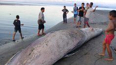 พบซากวาฬปริศนาน้ำหนักกว่า 1 ตันเกยตื้นทะเลตรัง