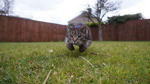 6 วิธีไล่แมว หมดห่วงเรื่อง กลิ่นขับถ่ายและมูลแมว ในรั้วบ้าน