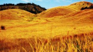 เที่ยวเส้นทางระนอง – พังงา ธรรมชาติงาม ที่ไม่ได้เป็นเพียงแค่ทางผ่าน