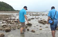 ปะการังโผล่ หลังน้ำทะเลเกาะทะลุลดต่ำสุดในรอบ 20 ปี