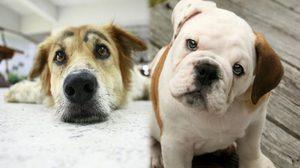 ข้อกฎหมายเกี่ยวกับการเลี้ยงสุนัข มีอะไรบ้าง อยากเลี้ยงต้องรู้
