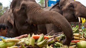 """วันช้างไทย ปลูกจิตสำนึกให้ """"รักษ์ช้างไทย"""" 13 มีนาคม"""