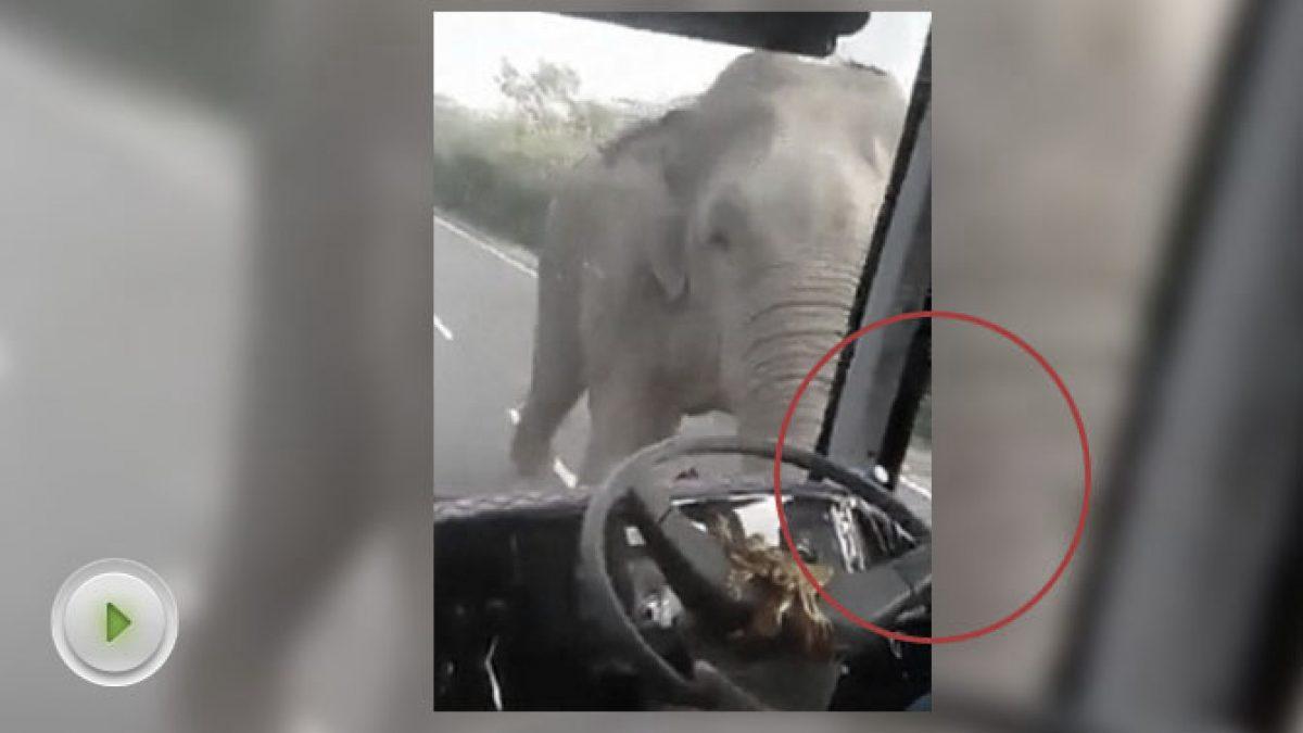 อย่าทำแบบนี้นะครับ...! จอดรถให้อาหารช้างป่าถูกช้างใช้งวงฟาดทะลุกระจกรถ