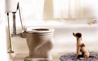 My Dog Skip สคิป เจ้าหมาเพื่อนรัก