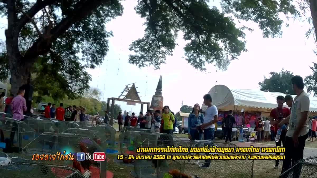 สีสันเปิดงานมหกรรมไก่ชนไทย ยอยศยิ่งฟ้าอยุธยา มรดกไทยมรดกโลก ปี 2560