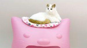 โซฟาบ้านน้องแมว เฟอร์นิเจอร์เก๋ไก๋เอาไว้ประดับบ้าน