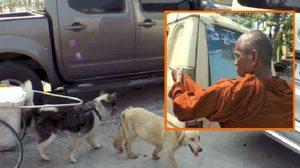 แจ้ง จนท. ตรวจพระใช้สุนัขลากบิณฑบาต ชี้ทรมานสัตว์