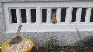 สาวโพสต์ภาพสุนัขถูกขังไว้ใต้ถุนศาลากลางเมืองคอน