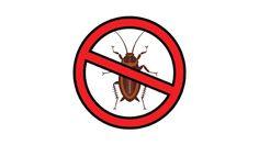 3 วิธี ไล่แมลงสาบ แบบไร้สารพิษ ให้ไปไม่กลับ ดีต่อคน ดีต่อใจ