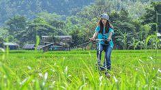 ปั่นจักรยานเที่ยวปาย ชมวิวทุ่งนาป่าเขาในหน้าฝน