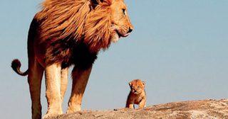 ย้ายสิงโต