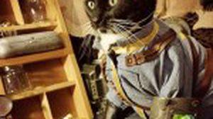 เกมเมอร์ตปท. พาน้องแมว คอสเพลย์เป็นตัวละครเกมส์ Fallout 4