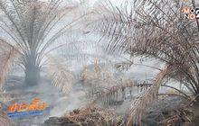 ไฟไหม้สวนปาล์มฯ 30 ไร่ ในป่าพรุบาเจาะ คลี่คลาย
