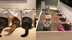 ปรับไอเดียร้านราเมนข้อสอบ มาเป็นห้องอาหารแมว