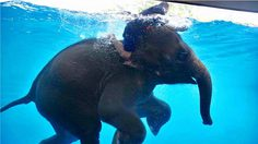 7 Places in Thailand to befriend with Home's animals