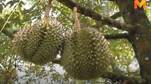 พาณิชย์ติวเข้มชาวสวนผลไม้รุกตลาดยุคการค้าเสรีชี้ไทยติดอันดับ 10 ของโลก