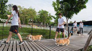 """""""หมาราธอน"""" กิจกรรมวิ่งครั้งแรก ที่คนรักสุนัขกับสุนัขที่รัก ได้วิ่งร่วมกัน"""