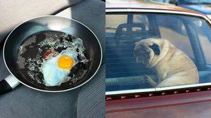 ตอกไข่ใส่กระทะในรถร้อนๆ หนุ่มคนนี้ทำให้เรารู้ว่าไม่ควรปล่อยหมาเอาไว้ในรถ