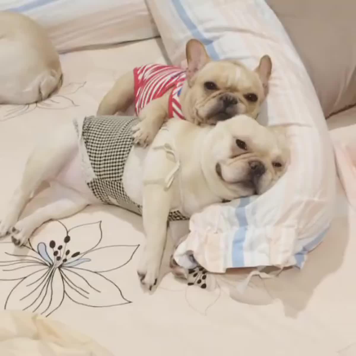 หลับฝันดีฮับพี่ๆ #order & #barbie