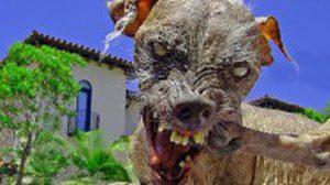 Nana คือ สุนัข น่าเกลียด ที่สุดในโลก