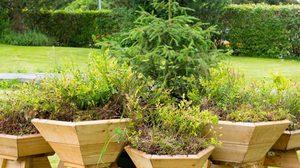 กระถางต้นไม้ สำเร็จรูปสุดเก๋ จำลองระบบนิเวศป่า มาอยู่ในบ้าน