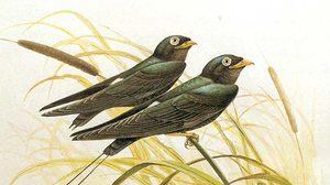 นกเจ้าฟ้าหญิงสิรินธร ครบรอบ 50 ปี การค้นพบ นกชนิดสำคัญในประเทศไทย