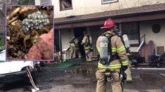 หนุ่มขาโหดพยายามจุดไฟเผา แมงมุม จนไฟลุกไหม้อพาร์ทเม้นท์เกือบทั้งตึก!!!