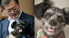 มุนแจอิน ประธานาธิบดีเกาหลีใต้ รับเลี้ยงหมาจรจัด ต่อต้านการค้าเนื้อสุนัข