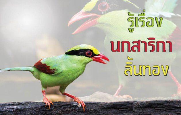 รู้เรื่องนกสาริกาลิ้นทอง กับ อ.มดดำ ยิปซีคาราวาน