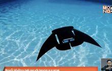 สิงคโปร์พัฒนาหุ่นยนต์ปลากระเบนราหู