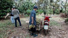 ชาวสวนจันทบุรีตื่นตัว! จ่อฝัง GPS หลังถูกโจรขโมยผลผลิต