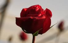 เอกวาดอร์ หวังทุบสถิติจัดดอกไม้ขนาดใหญ่ที่สุดในโลก