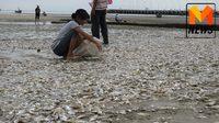 เกิดปรากฏการณ์น้ำเบียดที่หัวหิน ทำปลาตายเกลื่อนชายหาด
