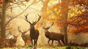 สัตว์โลกน่ารัก กับภาพสวยๆ วันใบไม้เปลี่ยนสี