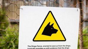 """รั้วกันหมาป่า """"Dingo Fence"""" ยาวที่สุดในโลก!"""
