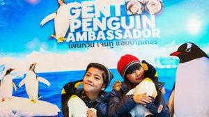 """สยาม โอเชี่ยน เวิร์ล นำท่านสู่ประสบการณ์พิเศษ เฟ้นหา 'Gentoo Penguin Ambassador' ต้อนรับการมา """"เจนทูเพนกวิน"""""""