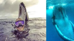 โฟโต้บอมบ์! หนุ่มออสเตรเลีย วัย 24 ปี ถ่ายเซลฟี่กับวาฬกลางมหาสมุทร