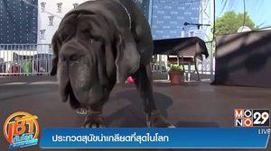 """""""มาร์ธา"""" หมาหน้าย่น คว้าแชมป์การประกวดสุนัขน่าเกลียดที่สุดในโลก"""