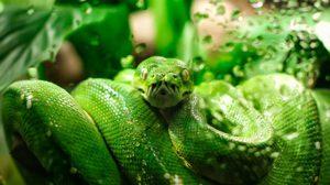 """วิธีป้องกันอันตรายจาก """"งู"""" ระหว่างการท่องเที่ยว"""