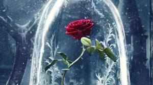 กุหลาบแดงในที่ครอบแก้ว งดงามเพียงหนึ่งเดียวบนโปสเตอร์ Beauty and the Beast