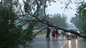 ฝนถล่มชุมพร ต้นไม้ขนาดใหญ่ล้มลงบนถนนสายเอเชีย 41 หลายจุด