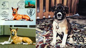 ประวัติ คุณทองแดง สุนัขทรงเลี้ยง ในรัชกาลที่ 9