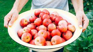 ผักผลไม้ 6 ชนิด ที่ยิ่งกินยิ่งดี - ถั่ว บร็อกโคลี่ ฝรั่ง กล้วยไข่ ส้ม แอปเปิ้ล